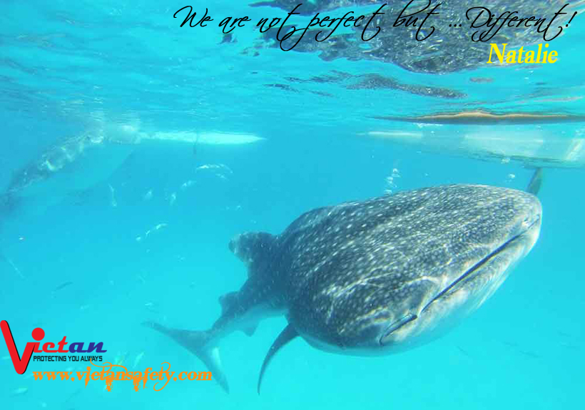 Whale-Sharks-in-Cebu-Philippines